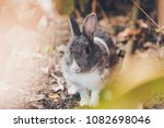 adorable little rabbit portrait ...   Shutterstock . vector #1082698046