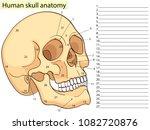 medical education chart of...   Shutterstock .eps vector #1082720876