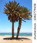 palm trees on beach. sea  sky ...   Shutterstock . vector #1082779658