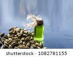 raw organic green cardamom or... | Shutterstock . vector #1082781155