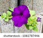flowers on stones | Shutterstock . vector #1082787446