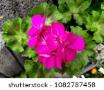 flowers on stones | Shutterstock . vector #1082787458