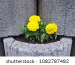 flowers on stones | Shutterstock . vector #1082787482