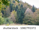 Stock photo autumn forest selva de irati fall beech jungle in navarra pyrenees of spain 1082792372