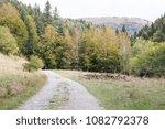 Stock photo autumn forest selva de irati fall beech jungle in navarra pyrenees of spain 1082792378