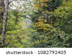 Stock photo autumn forest selva de irati fall beech jungle in navarra pyrenees of spain 1082792405