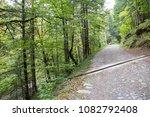 Stock photo autumn forest selva de irati fall beech jungle in navarra pyrenees of spain 1082792408