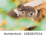 let's play hide and seek ...   Shutterstock . vector #1082819216