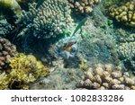 orange clownfish in colorful... | Shutterstock . vector #1082833286