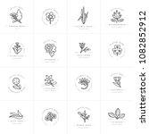 vector monochrome set design... | Shutterstock .eps vector #1082852912