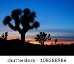 Joshua Trees Silhouetted ...