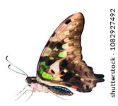 Small photo of The tailed jay butterfly, or green triangle, Graphium agamemnon, is isolated on white background. The butterfly has closed wing showing the underside of black with green and gray-pink, ready to fly