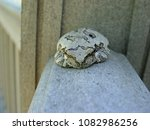 Small photo of Tree Toad on Deck Railing
