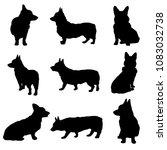 Stock vector vector pembroke welsh corgi silhouettes 1083032738
