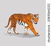 Tiger Walking Vector...