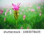 Fields Of Wild Flowers  Siam...