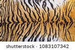 close up shot of real indo... | Shutterstock . vector #1083107342