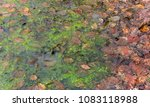 natural scenery showing brown... | Shutterstock . vector #1083118988