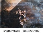pendants with the image of a... | Shutterstock . vector #1083220982