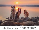 Three Dogs Sit On Rocks On The...