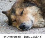 stray dog sleep | Shutterstock . vector #1083236645