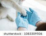 cropped image of veterinarian... | Shutterstock . vector #1083309506