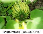 home grown organic pumpkin on... | Shutterstock . vector #1083314246