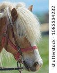 purebred horse closeup in nature | Shutterstock . vector #1083334232