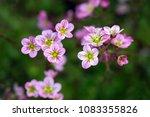 pink flowers growing in the... | Shutterstock . vector #1083355826