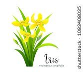 vector iris yellow flower ... | Shutterstock .eps vector #1083408035