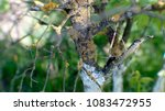 ill tree close up | Shutterstock . vector #1083472955