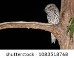the tawny frogmouth  podargus... | Shutterstock . vector #1083518768
