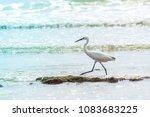 White Egret Lives On The Beach.