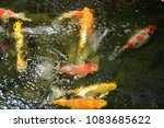 crayfishs  playing  in  the ... | Shutterstock . vector #1083685622
