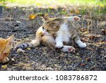 Small photo of lovely stray kitten