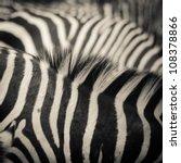 animal zebra black and white... | Shutterstock . vector #108378866