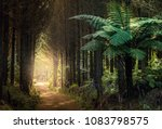 Forest With Tree Ferns  New...