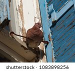 large brown dove sits on a heck ... | Shutterstock . vector #1083898256