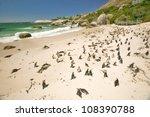 Penguin At Boulders Beach ...