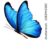 Wings Of A Blue Butterfly...
