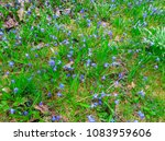 the first spring flowers are... | Shutterstock . vector #1083959606