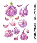 set of watercolor garlic. hand... | Shutterstock . vector #1083995888
