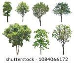 treetop leaf green tropical... | Shutterstock . vector #1084066172