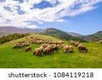 flock of sheep on pasture ...   Shutterstock . vector #1084119218
