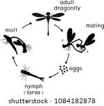 life cycle of dragonfly.... | Shutterstock .eps vector #1084182878