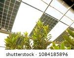 Loquat In Solar Photovoltaic...