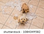 remorseful  naughty and bored... | Shutterstock . vector #1084349582
