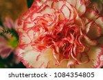 pink carnation flower | Shutterstock . vector #1084354805