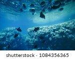 underwater life of the red sea  ... | Shutterstock . vector #1084356365