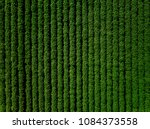 green country field of potato... | Shutterstock . vector #1084373558